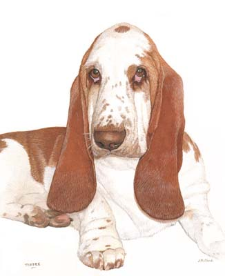 Pet Portraits Basset Hound painting by Isabel Clark