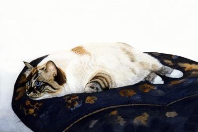 Pet Portraits - Cat Paintings from Your Own Photos - Cat on Cushion painted in Watercolours
