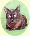 Click for larger image of cat painting by Isabel Clark - UK artist