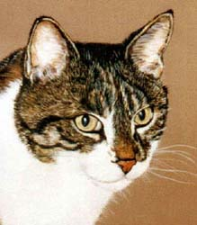 Pet Portraits - Tabby Cat Head Study