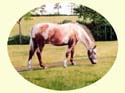 Click for larger horse painting