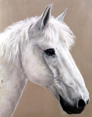 Pet Portraits - Horse and Pony Paintings from Your Favourite Photos - Horse Head Study in Oils