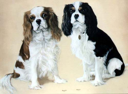 Pet Portraits - Dog Portraits from Your Favourite Photos - Cavalier King Charles Spaniels