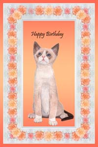 Snowshoe Cats and Kittens Cards and Portraits