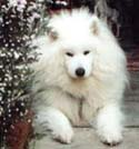 Shato - Loved and missed so much -  See you at Rainbow Bridge.