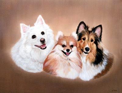Dog Portraits American Eskimo Dog Pomeranian And Rough Collie Dog